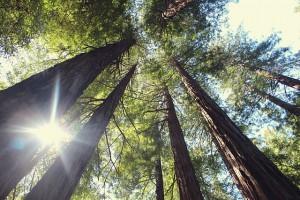 trees-1082211_640